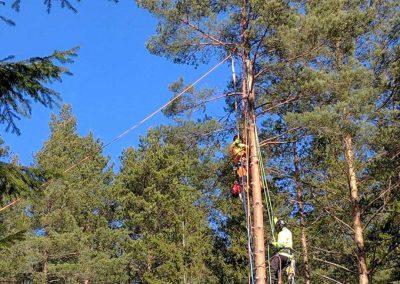 Uppvisning trädklättring på Backnilsbo skogsdag